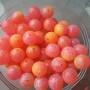 UV Steelhead Beads Spirit River - Clown Egg